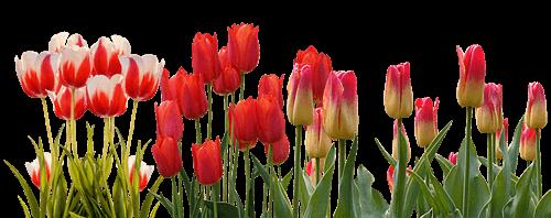 Garten Frühjar Frühling